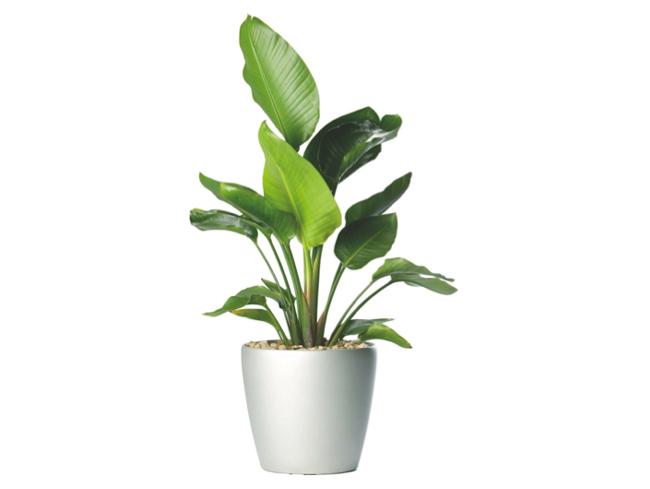 Flora Green Fields Co. LLC. Towards a greener environment